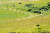 Green meadow with trails — Stock Photo