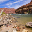 Colorado River Bank — Stock Photo
