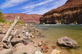Colorado River Bank — Stock Photo