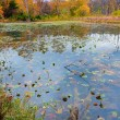 Autumn lake — Stock Photo #5470773