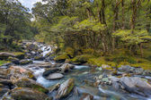 Mountain Stream — Stockfoto