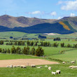 New Zealand agriculture - Stock Photo