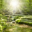 Stream in the forest -  