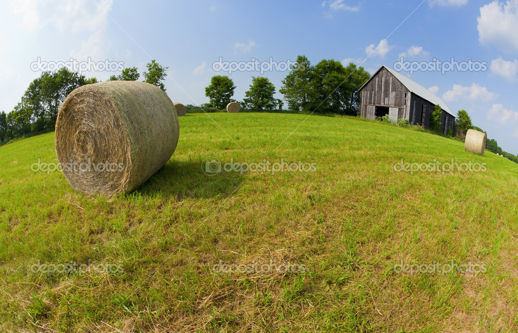 Hay bales in a field with an old barn on a sunny day — Stock Photo #6119491
