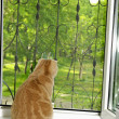Cat sitting on a window-sill — Stockfoto