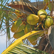 Foto Stock: Palm tree with coconuts