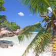 Palm tree on empty beach, Grand Soer, Seychelles — Stock Photo #5562396