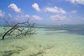 Azure tropical see with corals and dead tree, La Digue, Seychelles — Stock Photo