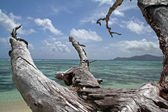 Tropical see with corals and dead tree, La Digue island, Seychelles — Stock Photo