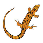 Realistic gecko lizard — Stock Vector