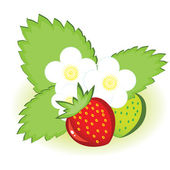 Ripe strawberries and green with flowers — Stock Vector