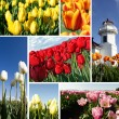 Tulpen-collage — Stockfoto
