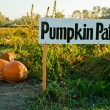 Pumpkin patch — Stock Photo #5454637