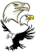 Eagle Head, Eagle — Stock Vector