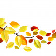 Autumn Leaves in October — Stock Vector