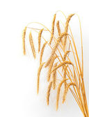 Botte de blé — Photo