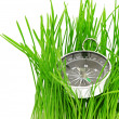 Compass in green grass — Stock Photo #5900758