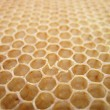 Beeswax texture without honey — Zdjęcie stockowe #5520610