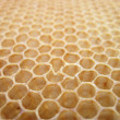 Stock Photo: Beeswax texture without honey