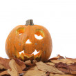 Halloween pumpkin — Stock Photo #5527764