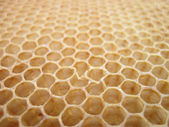 Beeswax texture without honey — Stockfoto