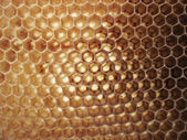 Beeswax background — Stock Photo