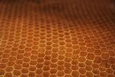 Empty honey background — Stock Photo
