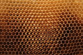 Beeswax wirhout honey — Stock Photo