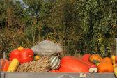 Pumpkins background — Stock Photo