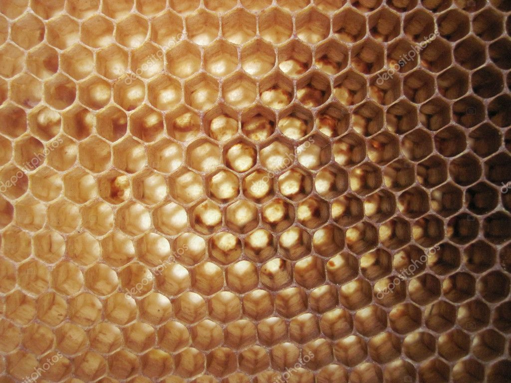 Beeswax background without honey (empy honeycells)  — Stockfoto #5520690
