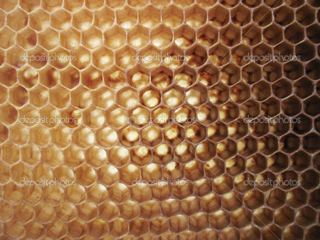 Beeswax background without honey (empy honeycells)  — Foto de Stock   #5520690