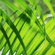 Green natural leaf background — Stock Photo