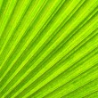 Green natural leaf background — Stock Photo #5598924