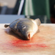 Dead fish (carps) — Stock Photo