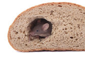 Mouse and the bread — Stock Photo