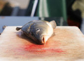 Dead fish (carps) — Foto Stock