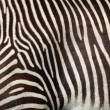 Royalty-Free Stock Photo: Zebra texture