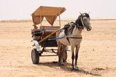 Horse in desert — Stock Photo