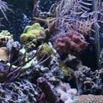 Aquarium background — Stock Photo #5622252