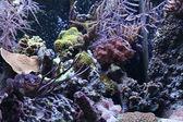 Aquarium background — Stock Photo