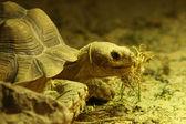Tartaruga — Foto Stock