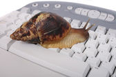 Snail on the keyboard — Foto Stock