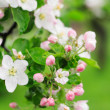 White spring flowers — Stock Photo #5734683
