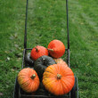 Citrouilles — Photo