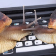 Stock Photo: Snails and keyboard