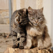 Stock Photo: Two cats