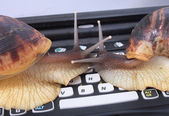 Snails and keyboard — Stok fotoğraf