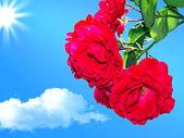 Rosas rojas sobre un fondo de cielo azul 2 — Foto de Stock