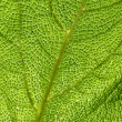 Green leaf texture, macro. - Stockfoto