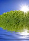 Folha verde contra o céu azul — Foto Stock
